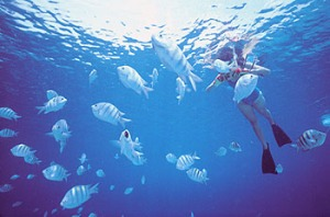 Discover the wonder of a Caribbean snorkeling adventure with WIMCO Villas
